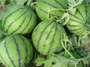 奉献爱心为偏远村庄农民卖农产品
