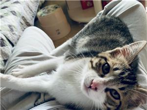 谁要三个多月的猫猫,打了一针疫苗和内外驱虫。在邻水可以送到家,其它地方自提