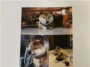 网友求助:爱犬走失,希望大家帮忙寻找,如有线索必有重谢
