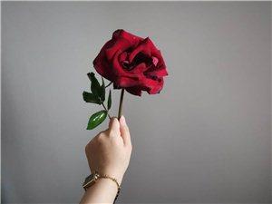 ����M情�`放的玫瑰