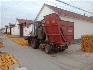 春雨玉米收