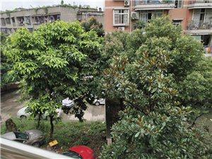 富洲花园3室2厅2卫精装修61.8万元
