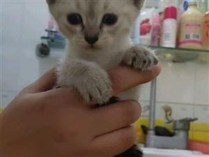?#25104;?#34382;斑猫宝宝出售