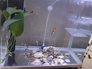 孔雀鱼练手鱼