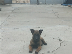 �R犬??四只出售