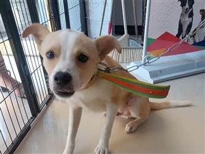 免费领养狗狗,希望有个好主人好好对狗狗。