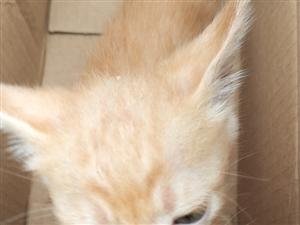 小奶猫出售