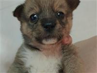 可爱狗狗免费领养
