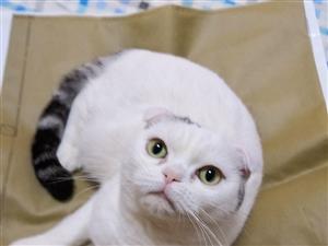 两只猫咪走失,好心人看见了帮忙说一下