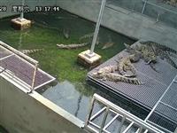信阳鳄鱼养殖场