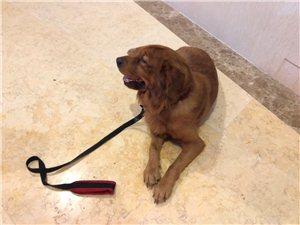 免费赠送可爱狗狗一只,听话乖巧