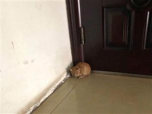 小橘猫免费领养