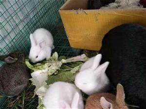 自家�B的小兔