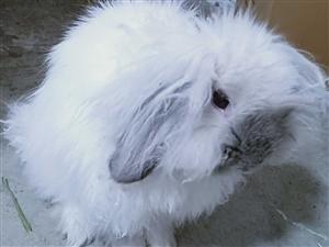 垂耳兔�I�B