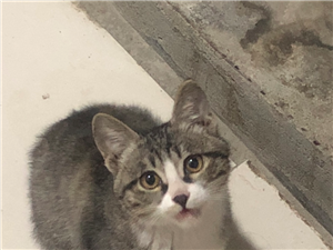 流浪猫寻人领养