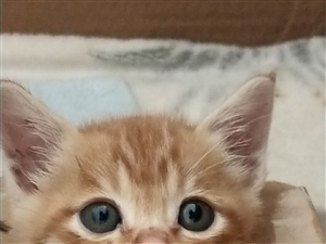 小橘猫免费赠送了,求给它一个温暖的家