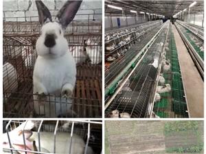 宜州大型养兔基地