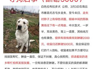 �H回我的狗狗�す�⑹境曛x5000