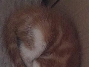 一个多月大的小萌猫赠送