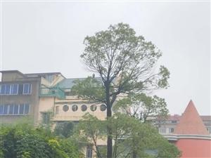 �F�R村�中心幼��@有�煽谜�溆�出售,高10米左右,有意者��系,��775315,�L�1356701...