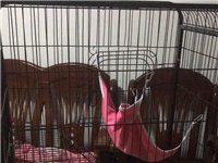 全新末用过猫笼,188元买的。掘港镇上门自提