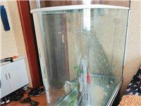 鱼缸贱卖,高1.5米,宽1.2米,厚度50厘米