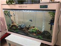 闽江牌鱼缸,新旧自观,所有功能都是好的,鱼缸做好之后就想卖了,全套带鱼带水草泥水草。只是享受制作的过...