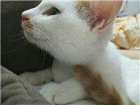 出售一只田園貓 無病無蘚 五粉 因家里還有一只養不過來 有想要的聯系我 18131251003