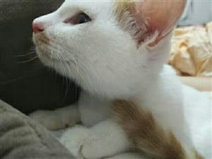 出售一只田园猫 无病无藓 五粉 因家里还有一只养不过来 有想要的联系我 18131251003