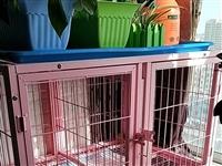 家用狗笼,子母笼,中间挡板可拆卸,95*65*65,结实抗造,8成新,有意私聊