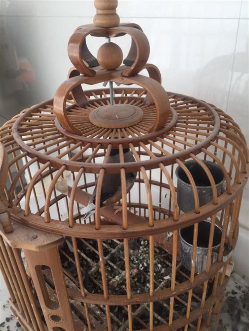 全帶鳥籠,小的貝子,辣嘴都是200,百靈鳥360,聲音動聽。