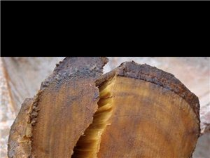 那大出售一批沉香原木,具�w看��物,是�资�根的原木,有老板看上�系。18708901976,潘生