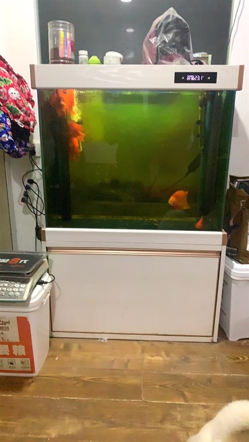 太平洋生態魚缸送魚 98×36×152 地址,臨泉縣港口路中段貴族寵物