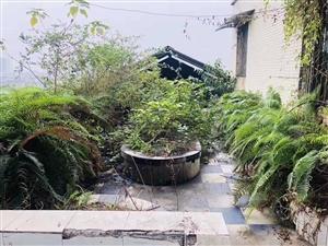 房东急售,????产权160平,????使用面积230平,带花园,带露台,????售价只要36.8万...