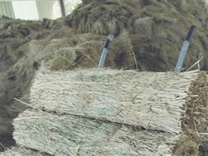 不种地了,改行了。因此出售韭菜地草苫子,四米长一米一宽。量大优惠,四米拱条,四米半宽,长四十五米米油...