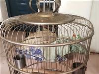 出售经典大号老款鸟笼子 精品 养大鸟的工艺品  世面稀少 不包邮 不锈钢材质  照片 实物拍摄 没有...
