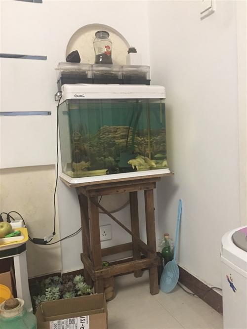 魚缸,50×30×40自改兩層六盒滴流盒