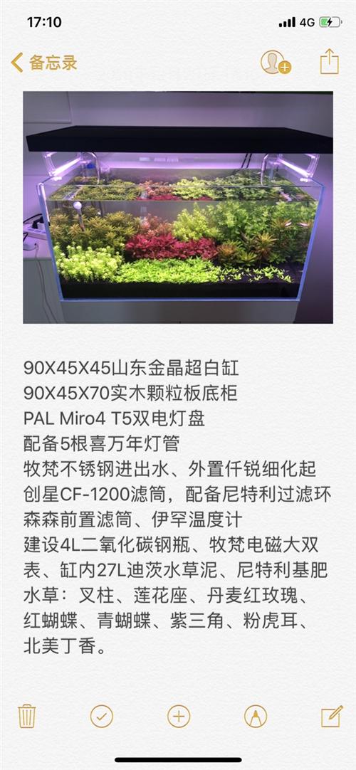 90X45X45山東金晶超白缸 90X45X70實木顆粒板底柜 PAL Miro4 T5雙電燈盤...