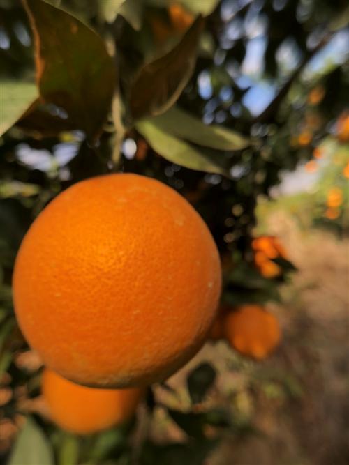 求租果山,要求:吉谭附近、年限不低于20年、能种1000-2000棵果树均可。
