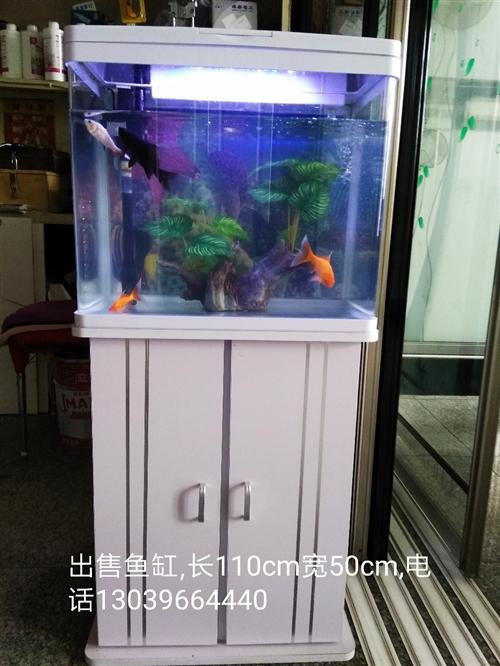 精品鱼缸出售,内带假山,有过滤器,有氧气泵,带滤网,带彩灯。联系电话13039664440