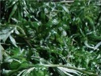 鄱阳湖野生藜蒿2元一斤10斤以上免费送货上门,鄱阳县城周边地区