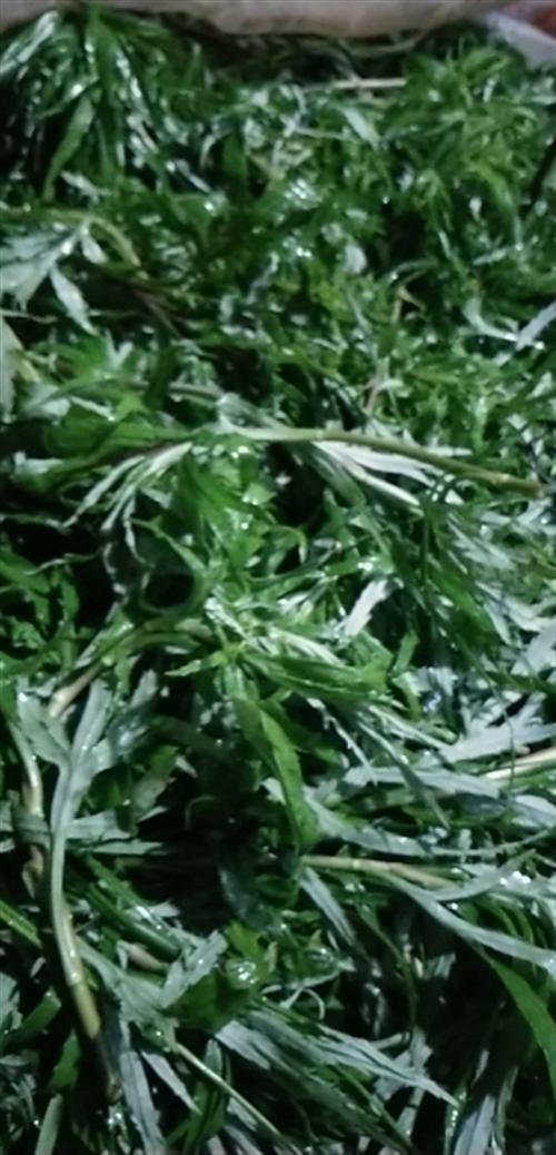 鄱陽湖野生藜蒿2元一斤10斤以上免費送貨上門,鄱陽縣城周邊地區