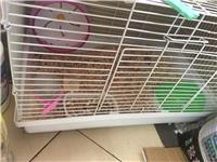 仓鼠一只,有笼子,跑轮,食盒,浴室,水壶,木屑1袋,口粮1桶,面包虫干,五谷杂粮一袋!