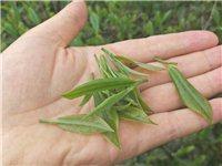 批发红茶绿茶,铁观音,正山小种,等