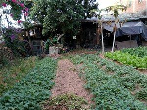 建業花園轉角地皮