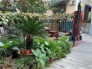 花园小区别墅3室2厅2卫130万元