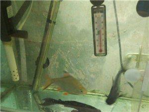 自养鱼出售