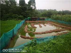 对外放钓,生态养殖鱼塘。