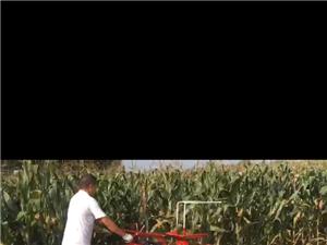 微型玉米收割机