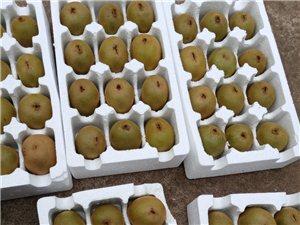 四川苍溪县红心猕猴桃当季新鲜水果
